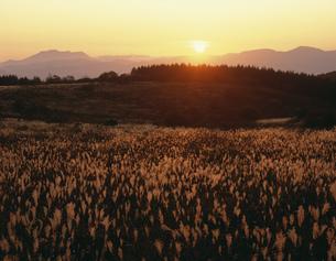 ススキの原と夕日 霧ヶ峰の写真素材 [FYI03273713]