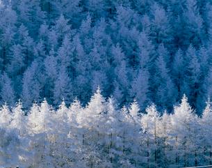 霧氷の写真素材 [FYI03273911]
