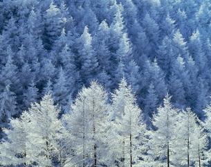 霧氷の写真素材 [FYI03273913]