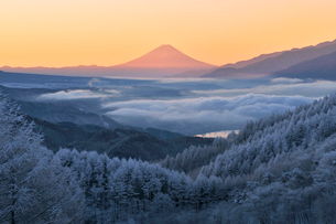 霧氷の高ボッチ高原から望む雲上の富士山の写真素材 [FYI03274117]