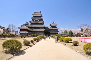 桜咲く松本城の写真素材 [FYI03274449]