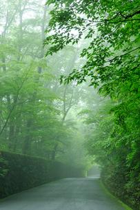 霧に包まれる軽井沢別荘地の道の写真素材 [FYI03274500]