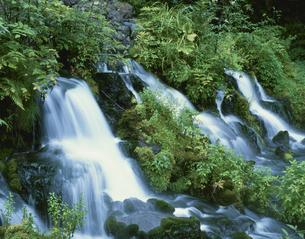 京極町ふき出し公園 羊蹄山麓  北海道の写真素材 [FYI03275072]