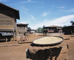 カトゥー族の村(織物の村)の写真素材 [FYI03275369]