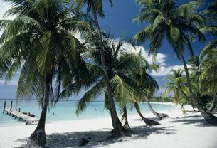 パラダイスビーチの写真素材 [FYI03278557]