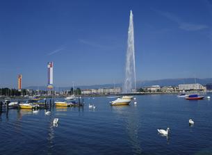 レマン湖の大噴水と街並み ジュネーブ スイスの写真素材 [FYI03282085]