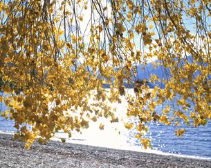 秋のワナカ湖畔にて 南島 ニュージーランドの写真素材 [FYI03282200]