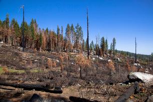 ヨセミテバレーの森林火災の写真素材 [FYI03283797]