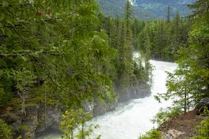 グレイシャー国立公園内の激流の写真素材 [FYI03283916]