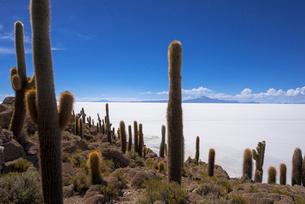 ウユニ塩湖のインカ・ワシ島の写真素材 [FYI03285583]