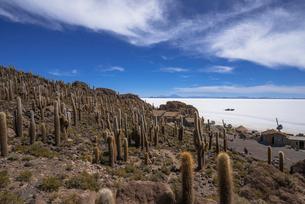 ウユニ塩湖のインカ・ワシ島の写真素材 [FYI03285584]