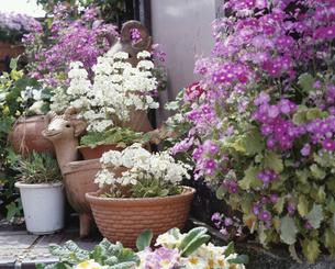 花咲く庭の写真素材 [FYI03285758]