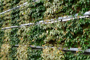 パネル式壁面緑化の風景の写真素材 [FYI03285881]