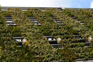 パネル式壁面緑化の風景の写真素材 [FYI03285883]