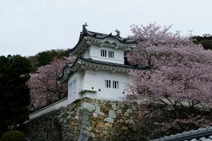 桜と龍野城の写真素材 [FYI03285939]