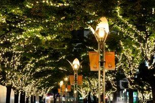 神戸ハーバランドのイルミネーションの写真素材 [FYI03286000]