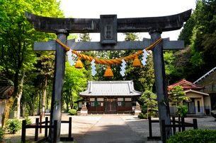 岸部神社鳥居から本殿を見るの写真素材 [FYI03286160]
