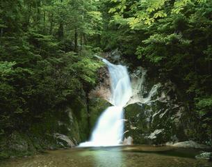 五竜の滝の竜尾の滝 寂地峡の写真素材 [FYI03286957]