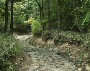 旧中山道の石畳 落合宿付近6月 岐阜県の写真素材 [FYI03286962]