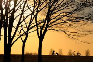 水元公園の冬木立ちの写真素材 [FYI03288542]