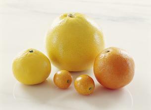 柑橘類メローゴールド他の写真素材 [FYI03288617]