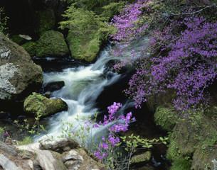 湯川と竜頭滝の写真素材 [FYI03289557]