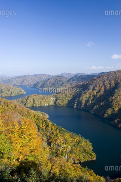 田子倉湖の紅葉の写真素材 [FYI03289640]
