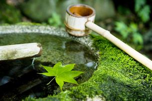 つくばいとカエデの葉と柄杓 那須温泉神社の写真素材 [FYI03289692]