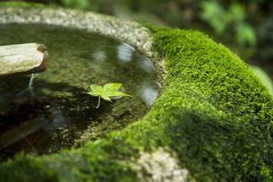 つくばいとカエデの葉 那須温泉神社の写真素材 [FYI03289713]