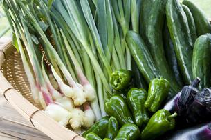 カゴの中の野菜 ピーマン・キュウリ・ナス・生姜・ネギの写真素材 [FYI03289756]
