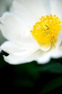 花の写真素材 [FYI03289779]