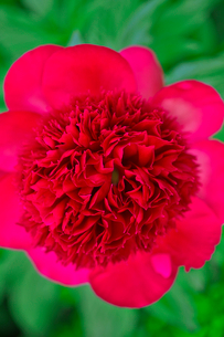 花の写真素材 [FYI03289780]