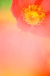 花の写真素材 [FYI03289815]