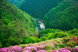 ツツジ咲く保津峡 保津川とトロッコ列車の写真素材 [FYI03289920]