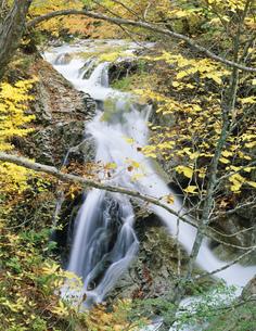 照葉峡岩魚の滝の写真素材 [FYI03290325]