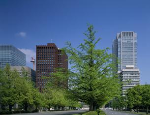 いちょう並木と丸ビルの写真素材 [FYI03290380]