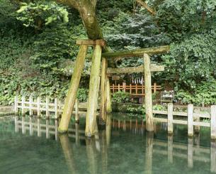 鹿島神宮御手洗池の写真素材 [FYI03290458]