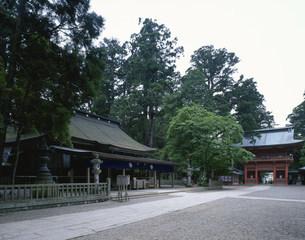 鹿島神宮楼門と社殿の写真素材 [FYI03290459]