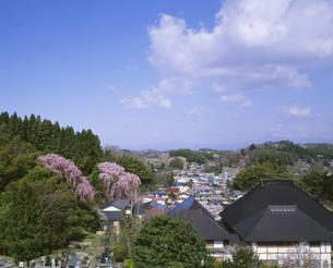 福聚寺の枝垂れ桜の写真素材 [FYI03290588]