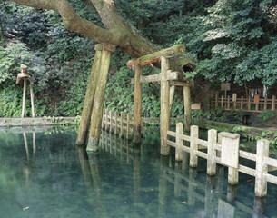 鹿島神宮御手洗池の写真素材 [FYI03291152]