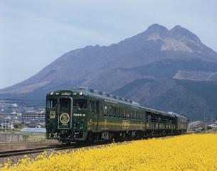 由布岳とトロッコ列車の写真素材 [FYI03291408]