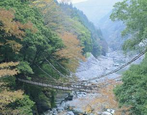 かずら橋 西祖谷山村の写真素材 [FYI03291564]
