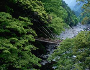 かずら橋の写真素材 [FYI03292246]
