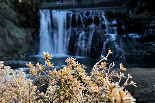 凍てつく龍門の滝の写真素材 [FYI03292910]