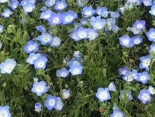 青いじゅうたんの写真素材 [FYI03293453]