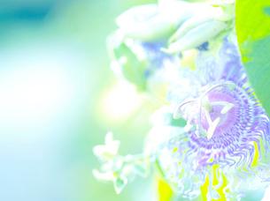 光と植物の写真素材 [FYI03297267]