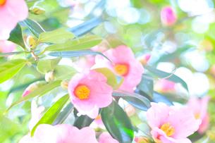 光と植物の写真素材 [FYI03297274]
