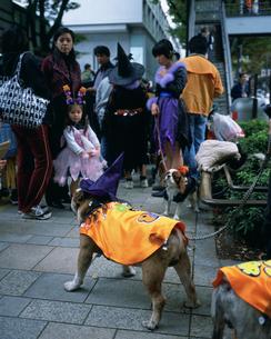 ハロウィンパレードの犬の写真素材 [FYI03297661]