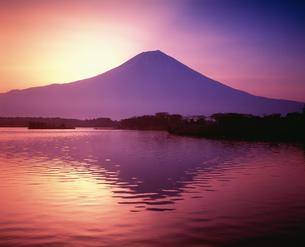 夜明けの富士山と田貫湖の写真素材 [FYI03298074]