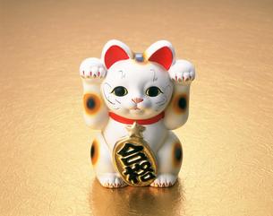 合格猫の写真素材 [FYI03298108]